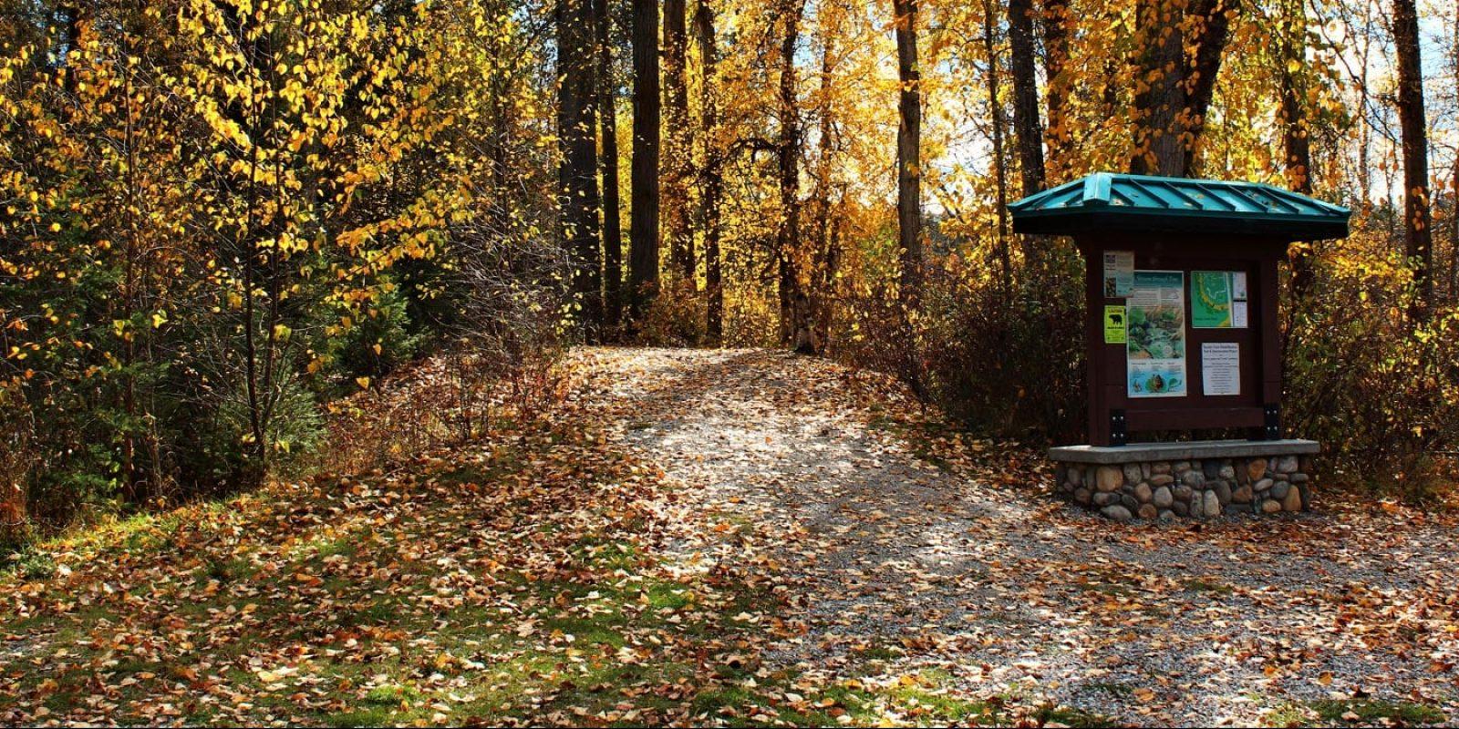 11.-Fall-Colours-on-the-Sinclair-Trail,-Lauren-Logan